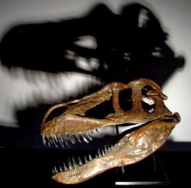The new dinosaur species is estimated up to 10 meters long and 4-5 tons.