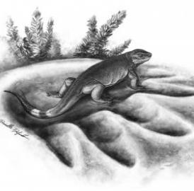 The smallest and largest caseid: this is a reconstruction of 300-million-year-old tiny carnivorous <i>Eocasea</i>  in the footprint of 270-million-year-old largest known herbivore of its time,  <i>Cotylorhynchus</i>.
