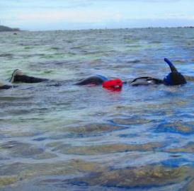 Researchers donned snorkels and examined three marine areas in Fiji that had adjacent fished areas. The country has established no-fishing areas to protect its healthy habitats and also to allow damaged reefs to recover over time.