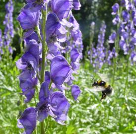 New evidence suggests bumblebees may experience 'confusion' between flower patterns.