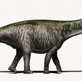This is <I>Brontosaurus</I> as researchers see it today -- with a <I>Diplodocus</I>-like head.