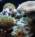 Organisms from tropical coral reefs serve as the research models in the lab of Professor David Kisailus.