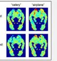 "Predicted fMRI images for ""celery"" and ""airplane"" show significant similarities with the observed images for each word. Red indicates areas of high activity, blue indicates low activity."