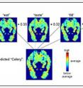 """Carnegie Mellon researchers predicted the functional magnetic resonance imaging (fMRI) activation pattern for concrete nouns such as """"celery"""" by statistically analyzing each noun's co-occurrence with 25 verbs such as """"eat,"""" """"taste,"""" and """"fill"""" in a text database. The predicted brain activity is created by combining the fMRI signatures for each of these verbs weighted according to the frequency of their co-occurrences with the noun."""