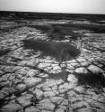 Cracks caused by the contraction of sulfate are evident in this image of the surface of Mars' Meridiani Planum site by NASA's Opportunity Rover.