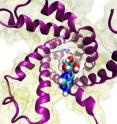 View of the ATP/ADP carrier from the cytoplasm, with the ADP molecule (blue, aqua, red and white spheres) at the entrance, ready to be funneled into the carrier.