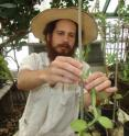 Pesach Lubinsky, a postdoctoral researcher in UC Riverside's department of botany and plant sciences, attends to a vanilla orchid.