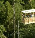 Researchers ride in the gondola of the 28-story Wind River Canopy Crane being used to study, among other things, tree mortality in an old growth forest in the Gifford Pinchot National Forest in southwest Washington state. The crane, operated by the University of Washington since 1997, is in a forest plot that was established for long-term study in 1948 by the Forest Service. Instruments at the crane site have been used to directly measure carbon flows between the forest and atmosphere for 10 years, the longest continuous such record in the Pacific Northwest.