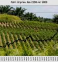 This graph shows palm oil prices from January 2000 to January 2009 according to the World Bank.