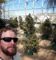 University of Arizona ecologist Henry Adams is pictured with pinyon pine trees inside the 3.4-acre Biosphere 2 dome, where climate was controlled to test the heat effect on drought-stressed trees.