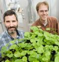 Adam Davis (left) of the US Department of Agriculture, Illinois Natural History Survey, postdoctoral researcher Richard Lankau (center) and INHS plant ecologist Greg Spyreas found that the invasive garlic mustard plant produces lower levels of a defensive toxin after about three decades in a new location.