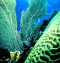 A thriving, healthy Carribean coral reef today: its evolution is an important factor in its future.