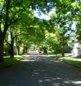 Large trees can make a neighborhood seem well-cared for. Shown here is a neighborhood in Portland, Ore., where a study was conducted that explored the effects of trees and other factors on crime occurrence in the city.