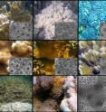 Selected images of the Hawaiian corals used for the HIMB study.