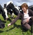 This is Gillian Butler at Newcastle University's Nafferton Farm, Northumberland, with some of the farm's cows.