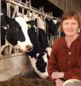 This is Gillian Butler with cows at Newcastle University's Nafferton Farm, Northumberland.