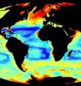 The image shows global invertebrate biomass, centred on the Atlantic. High and low values of biomass are indicated in red and dark blue, respectively.