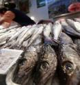 Hake caught in Africa are being labeled as American or European.