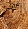 The researchers reconstructed the fire history of Hamilton County, Illinois, by examining fire scars and the growth rings of 36 old-growth trees.