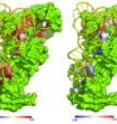 Crystal structure of glutaminyl tRNA synthetase (GlnRS, green) in complex with its substrate tRNA^Gln (yellow). Left panel: Color-coded residues depict favorable (blue) and unfavorable (red) effects on the free energy of glutamine binding from mutation at this position. Right panel: Effects of mutation on the ability of GlnRS to catalyze amino acid attachment to the tRNA. In this case all effects are unfavorable.