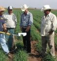 Farmers in Mexico's Yaqui Valley use a nitrogen sensor to optimize fertilizer application, thus reducing costs and agricultural runoff.