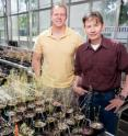 University of Illinois animal biology professor and department head Ken Paige (right) and doctoral student Daniel Scholes discovered that some plants multiply their chromosomes without undergoing cell division after they have been grazed, a process that boosts their productivity above that of plants not damaged by grazing.