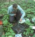 Scott Loss uses a liquid-mustard mixture to sample earthworms.  The mustard contains a skin irritant that causes earthworms to come to the surface. A recent decline in ovenbirds (<I>Seiurus aurocapilla</I>), a ground-nesting migratory songbird, in forests in the northern Midwest US is being linked by scientists to a seemingly unlikely culprit: earthworms.