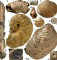 This image shows the variety of invertebrate fossils collected from the methane seep studied for this research. The scale bar applies to all except A, D, H and K.