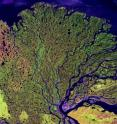 This is the Lena River delta. The Lena is one of several major rivers that flows northward into the Arctic Ocean.