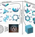 """This graphic illustrates the creation of morphing robot-like mechanisms and shape-shifting sculptures from a single sheet of paper in a method reminiscent of origami, the Japanese art of paper folding. The robotic and artistic designs are made up of building blocks called """"basic structural units,"""" or BSUs. Each BSU contains two segments joined by a creased hinge, and many BSUs are linked together to create larger structures."""