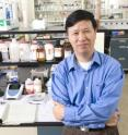 Ning Wang, a University of Illinois mechanical engineering professor, co-led a study showing that tumor-spreading cancer cells grow better in a soft substrate, much like stem cells.