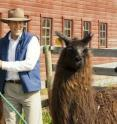 Gregg Adams with a University of Saskatchewan llama east of Saskatoon, Saskatchewan, Canada.