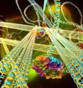The DNA gel is composed of stiff DNA nanotubes connected to each other via long, flexible DNA linkers.  A motor protein, FtsK50C, binds to special sites on the linkers.  When ATP, a biochemical fuel, is allowed to permeate the gel, the motor molecules reel in the linkers to which they are bound, drawing nanotubes together, and stiffening the gel.