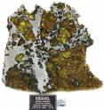 The Esquel meteorite, consisting of iron-nickel and olivine, was discovered in central Argentina.