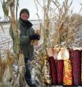 A new study led by CU-Boulder involving graduate student Chi-Chih Wu, shown here, indicates corn plants may have an altruistic side. Photo courtesy of CU-Boulder.