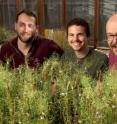 <p>This shows Salk researchers Bob Schmitz, Matt Schultz and Joseph Ecker.