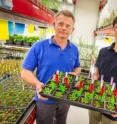 Henrik Scheller (left) and Dominque Loque, Joint BioEnergy Institute, shown here with <i>Arabidopsis</i> plants, are engineering plant cell walls to make the sugars within more accessible.