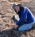 Josh Schimel, University of California, Santa Barbara, professor of environmental studies, takes a soil sample.