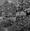 These are scanning electron microscope images of degraded plastic particles showing examples of surface textures on sampled plastic particles.