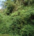 This image shows the habitat of <i>Rhinella yunga</i> in Peru.