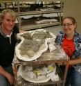 University of Alberta researchers Michael Burns and Victoria Arbour display a fossil from a newly discovered armoured dinosaur called <i>Ziapelta sanjuanensi</i>.