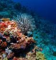 Coral reefs are one of the key calcifying species threatened by ocean acidification.