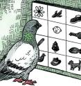 In a new study from the University of Iowa, researchers found that pigeons can categorize and name both natural and manmade objects -- and not just a few objects. These birds categorized 128 photographs into 16 categories, and they did so simultaneously.