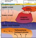 A new University of Utah study in the journal <i>Science</i> provides the first complete view of the plumbing system that supplies hot and partly molten rock from the Yellowstone hotspot to the Yellowstone supervolcano. The study revealed a gigantic magma reservoir beneath the previously known magma chamber. This cross-section illustration cutting southwest-northeast under Yelowstone depicts the view revealed by seismic imaging. Seismologists say new techniques have provided a better view of Yellowstone's plumbing system, and that it hasn't grown larger or closer to erupting. They estimate the annual chance of a Yellowstone supervolcano eruption is 1 in 700,000.