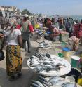 A typical day at the fish market in Dakar, Senegal.