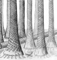This is a reconstructed drawing of Svalbard fossil forest.
