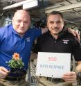 One-year mission crew members Scott Kelly of NASA (left) and Mikhail Kornienko of Roscosmos (right) celebrated their 300th consecutive day in space on Jan. 21, 2016. By spending a total of 340 days aboard the International Space Station, the astronauts help scientists understand what happens to the human body while in microgravity for extreme lengths of time. Kelly is holding a zinnia grown in space as part of the Veggie experiment on the International Space Station.