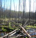 Climate change and human activities threaten the natural state of peat bogs, such as this Alberta peatland that served as a research station.