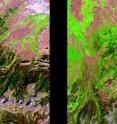 Image pair reveals pine beetle assault on Utah forest. Dark green healthy forest in 1992 (left) is dark red in 2010 (right).