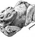 An illustration of the leporid sculpture from the Oztoyahualco compound of Teotihuacan.